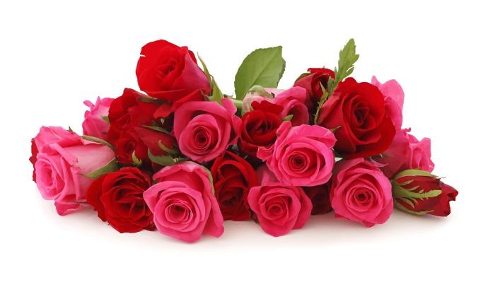 flowers-1335636_1920